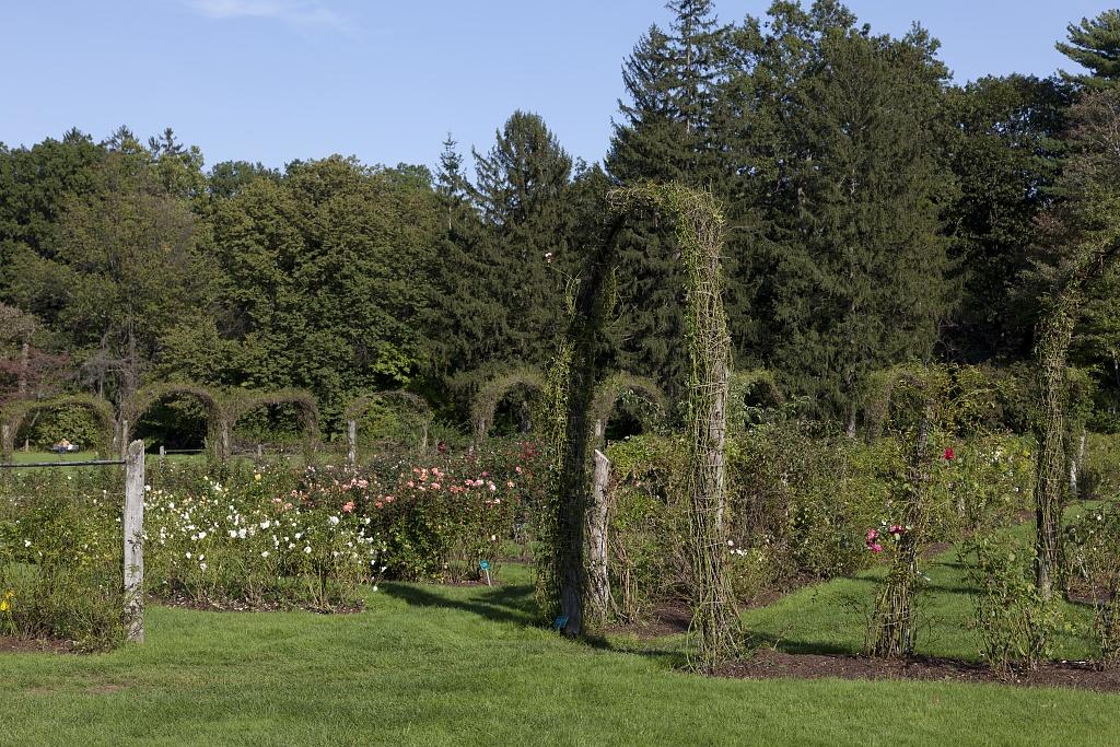 A beautiful rose garden